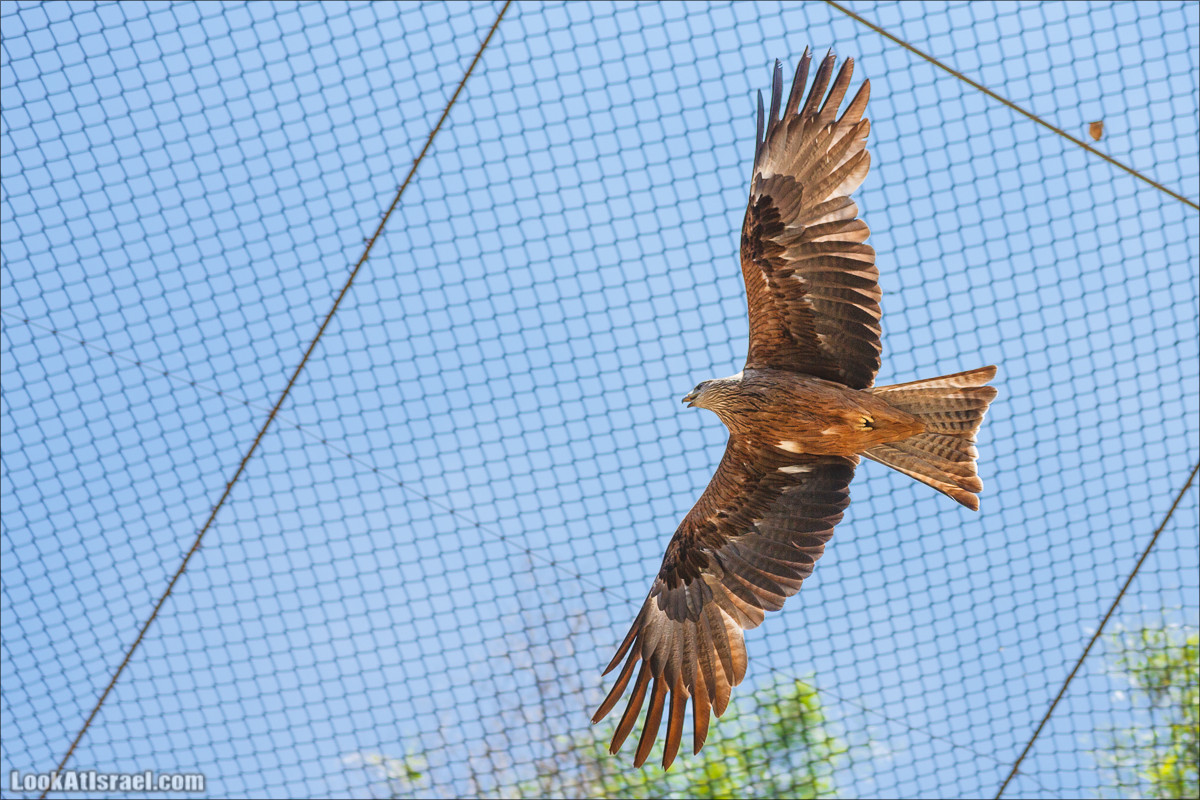 Иерусалимский зоопарк библейских животных | LookAtIsrael.com - Фото путешествия по Израилю