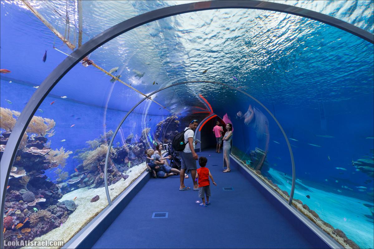 Подводная обсерватория Океанариум, Эйлат   LookAtIsrael.com - Фото путешествия по �зраилю