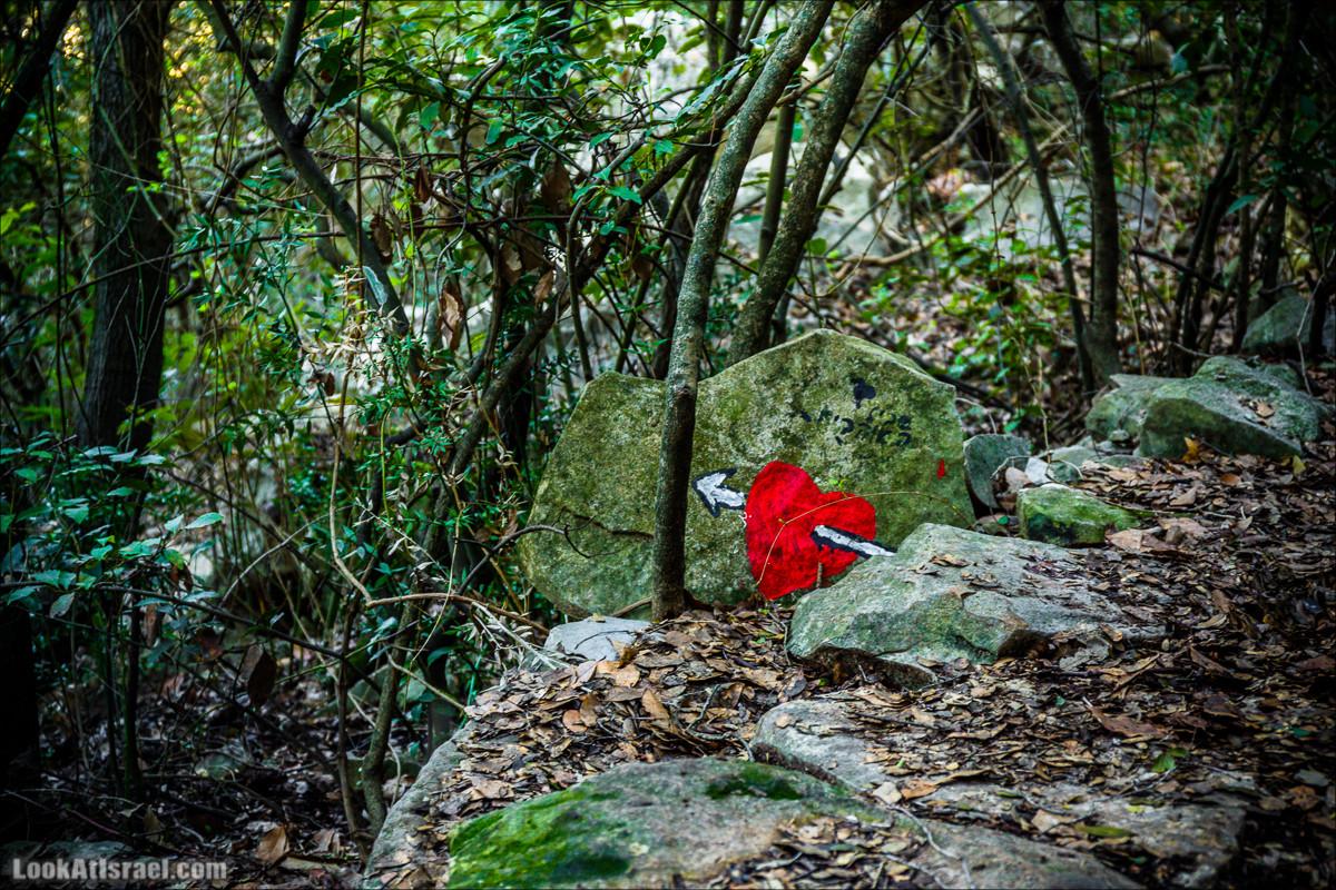 Тропа Нормана, гора Бетах и цветущий двор