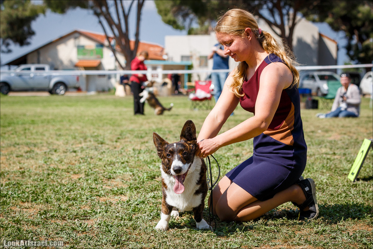 Выставка собак в Канот, Израиль. Доберманы, колли, пинчер, корги, пудель | LookAtIsrael.com - Фото путешествия по Израилю