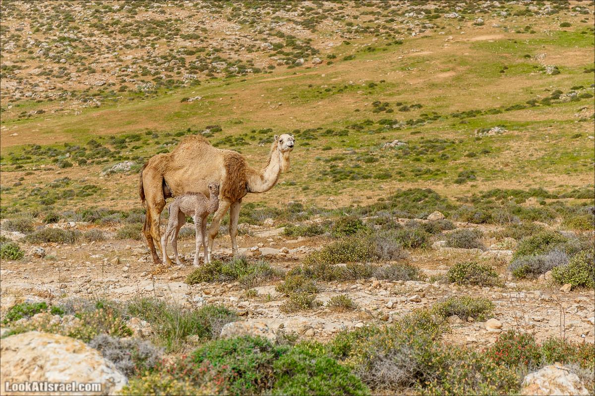 Пасхальный исход из будней по пути Авраама | LookAtIsrael.com - Фото путешествия по Израилю