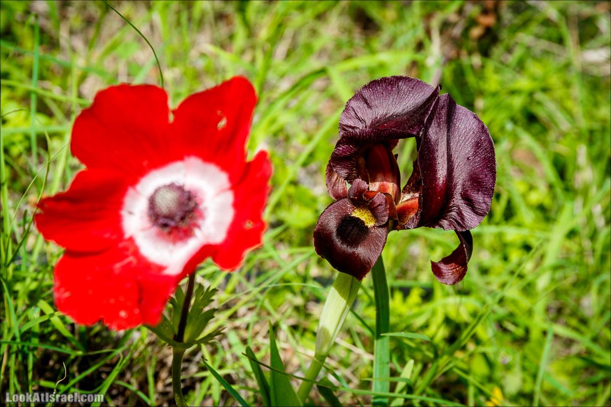 Цветение в парке Неот Кдумим