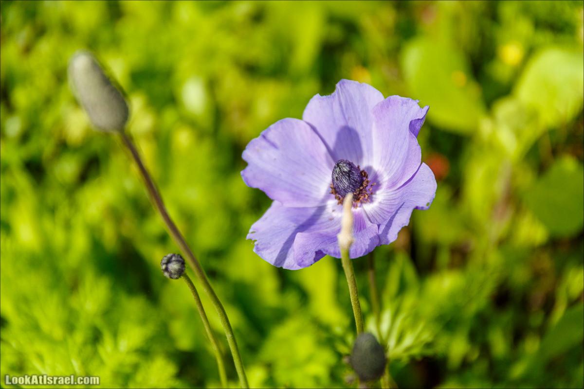 Цветение в парке Неот Кдумим | LookAtIsrael.com - Фото путешествия по Израилю
