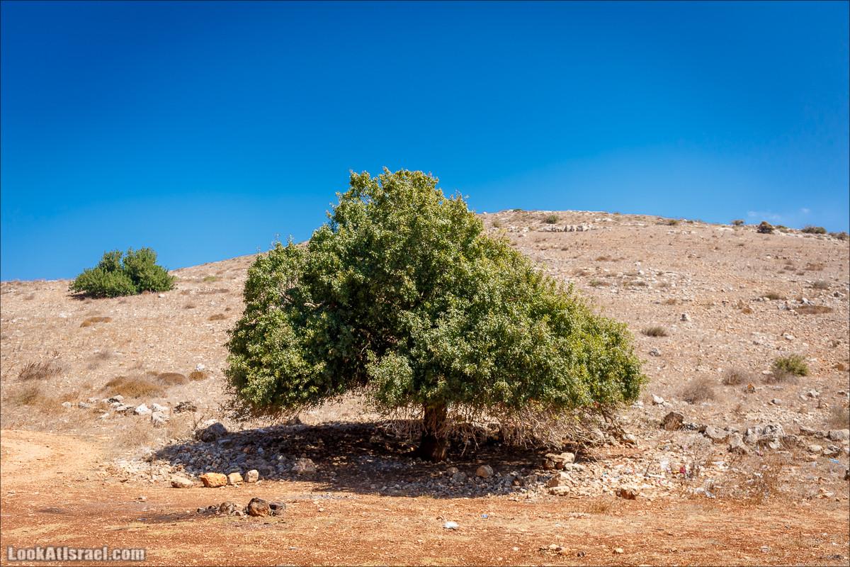 Ручей Циппори и долина Нетофа | נחל ציפורי ועמק נטופה | LookAtIsrael.com - Фото путешествия по Израилю