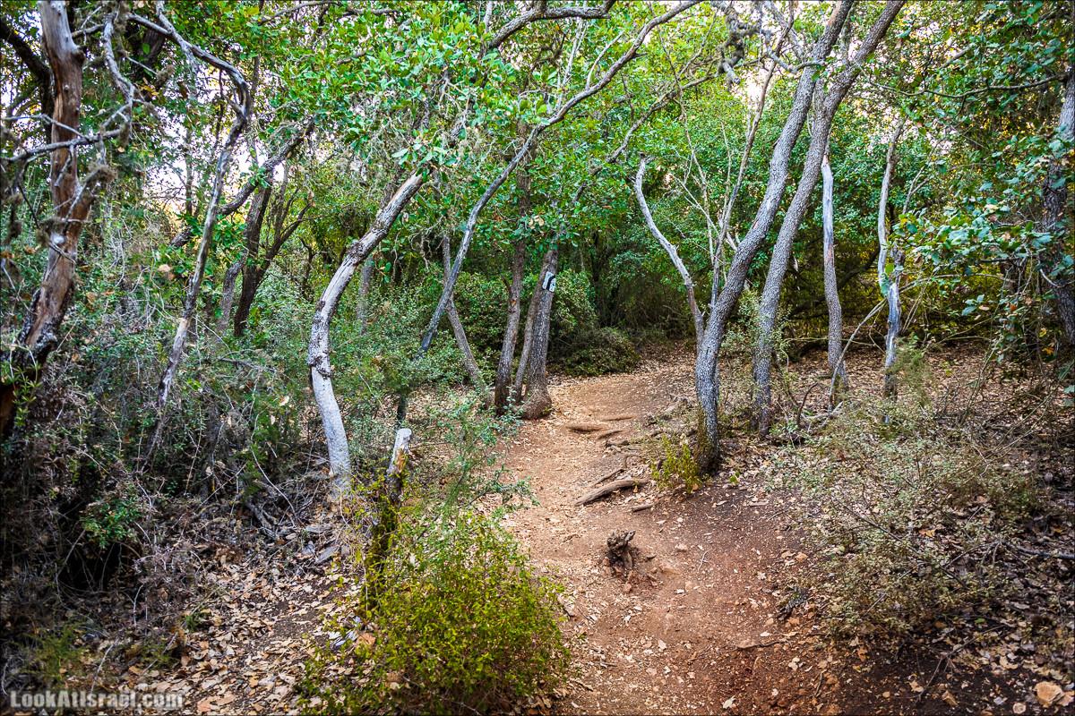 По окрестностям и вокруг горы Мирон | הר מירון | LookAtIsrael.com - Фото путешествия по Израилю