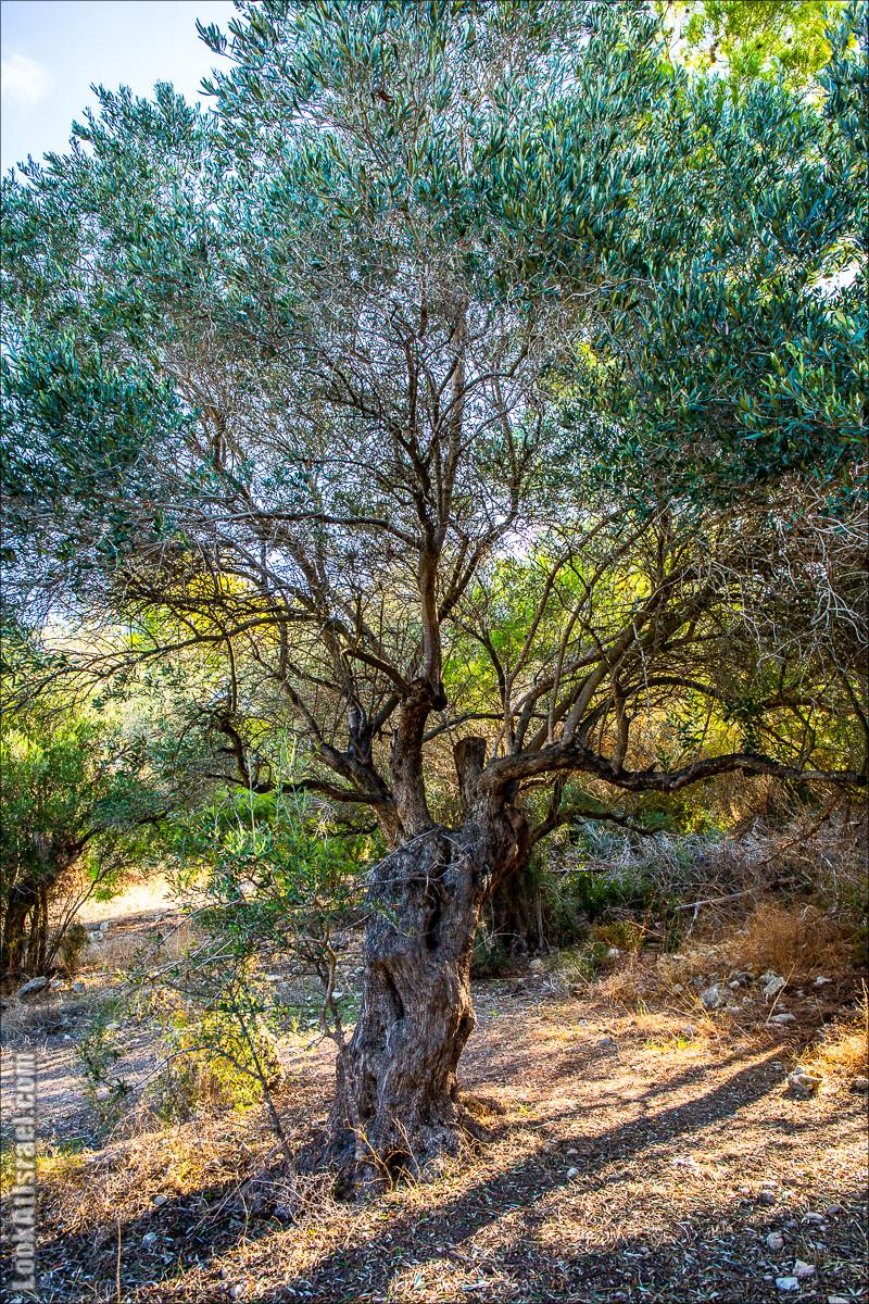 Пещера древнего человека в заповедника Нахаль Меарот и красивый маршрут по горе Кармель | LookAtIsrael.com - Фото путешествия по Израилю