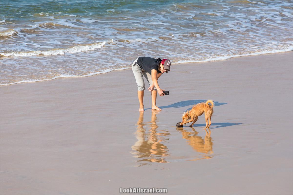 Море собак | LookAtIsrael.com - Фото путешествия по Израилю