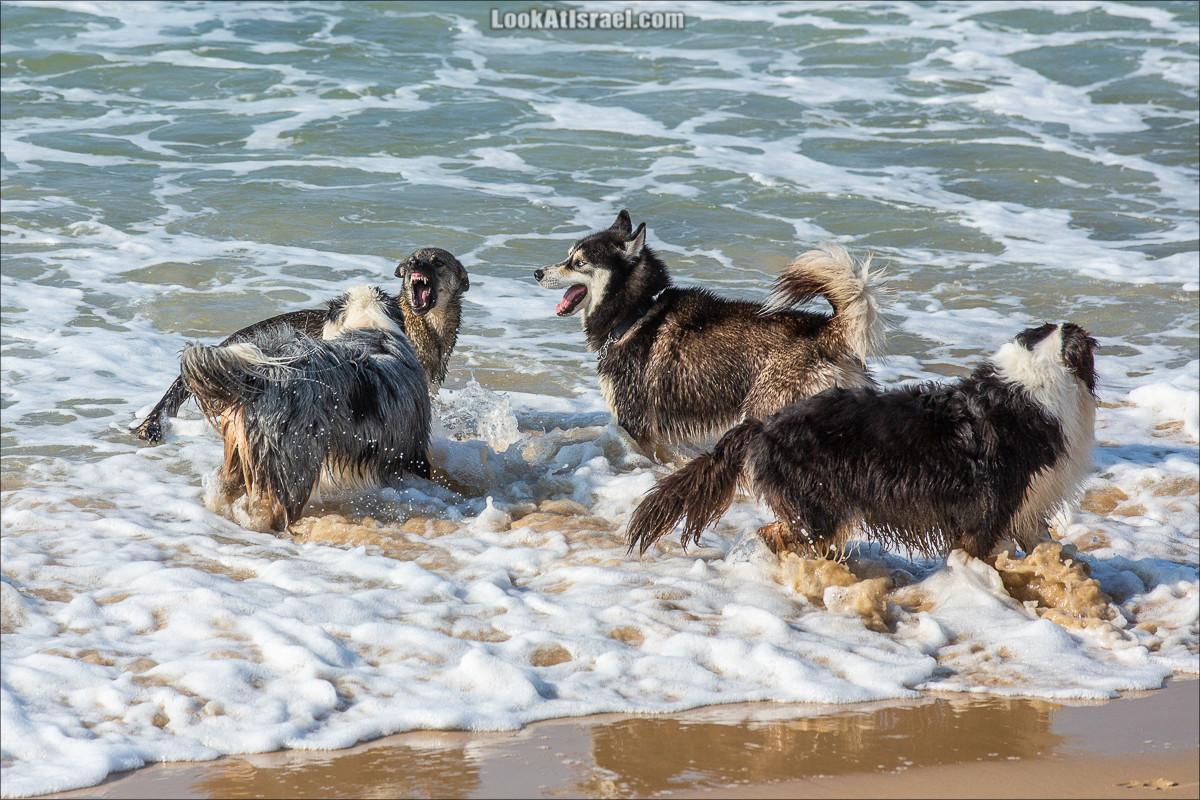 Море собак   LookAtIsrael.com - Фото путешествия по Израилю