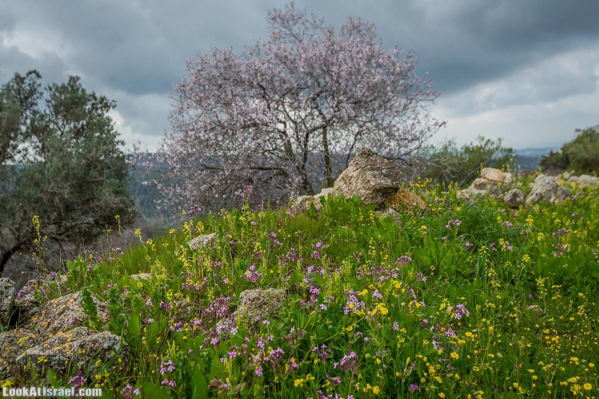 Путь Эммауса - по иерусалимским горам в долину Аялон | Emaus way | דרך אמאוס | LookAtIsrael.com - Фото путешествия по Израилю