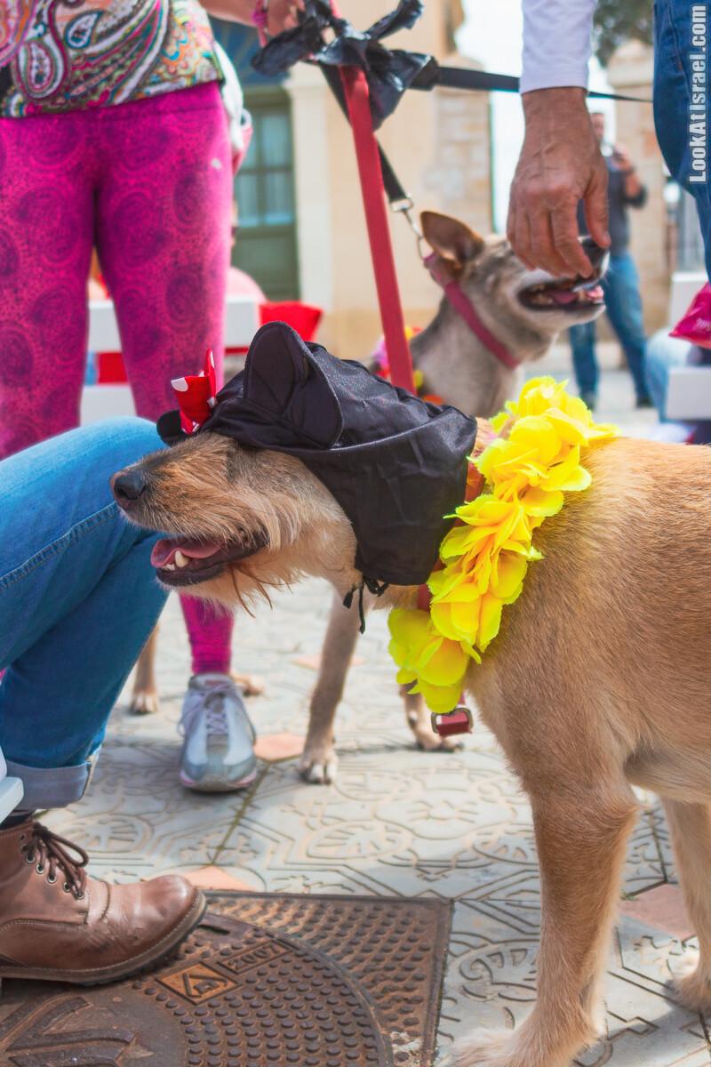 Костюмированный Пурим для собак, Тель-Авив | Dog's Purim in Tel-Aviv | אירוע פורים בתחנה- שישי כלבבי | LookAtIsrael.com - Фото путешествия по Израилю