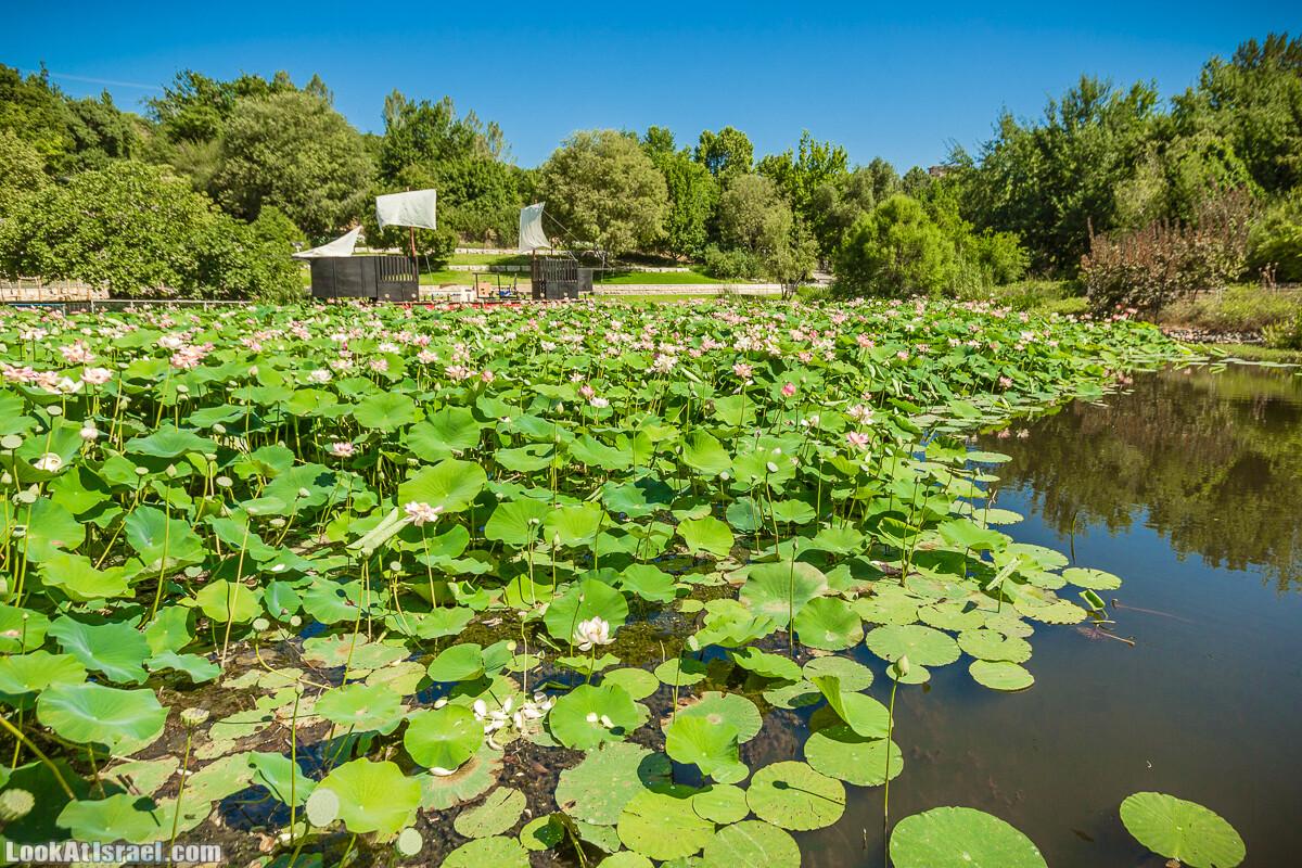 Ботанический сад Иерусалима - Лето