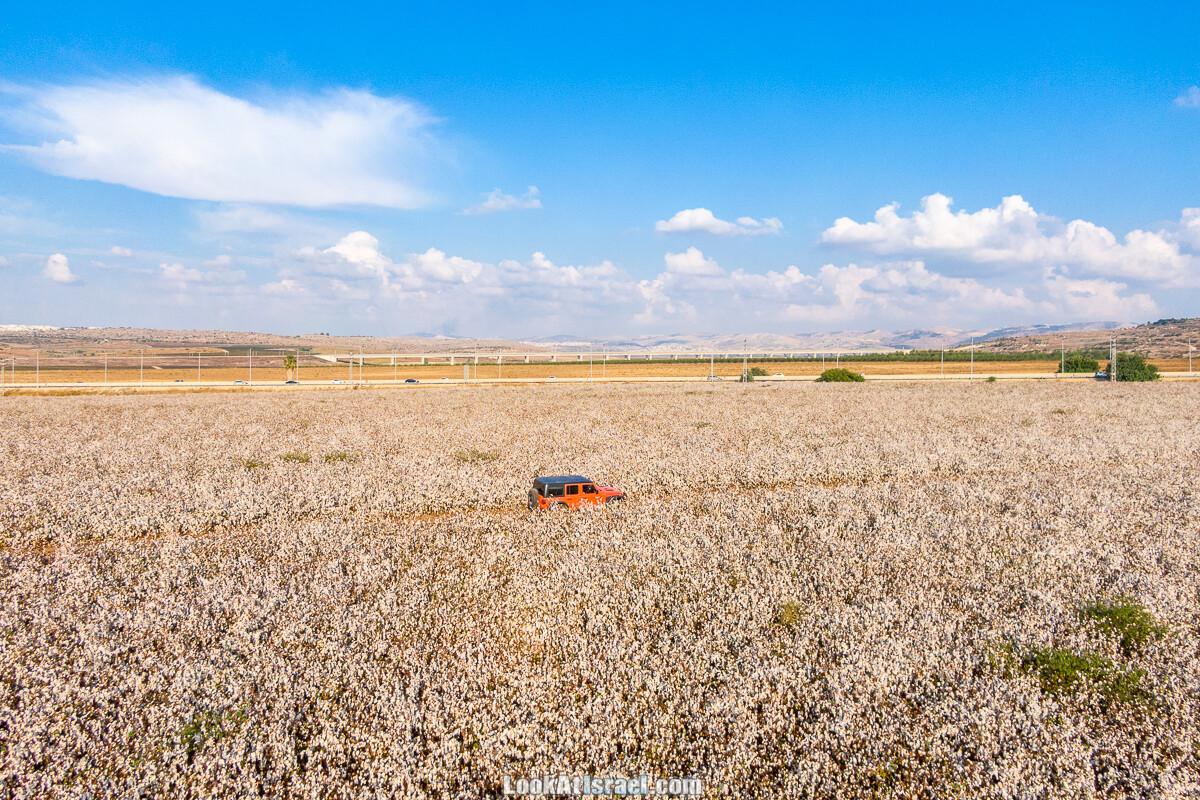 Поля хлопка в районе Латруна | LookAtIsrael.com - Фото путешествия по Израилю