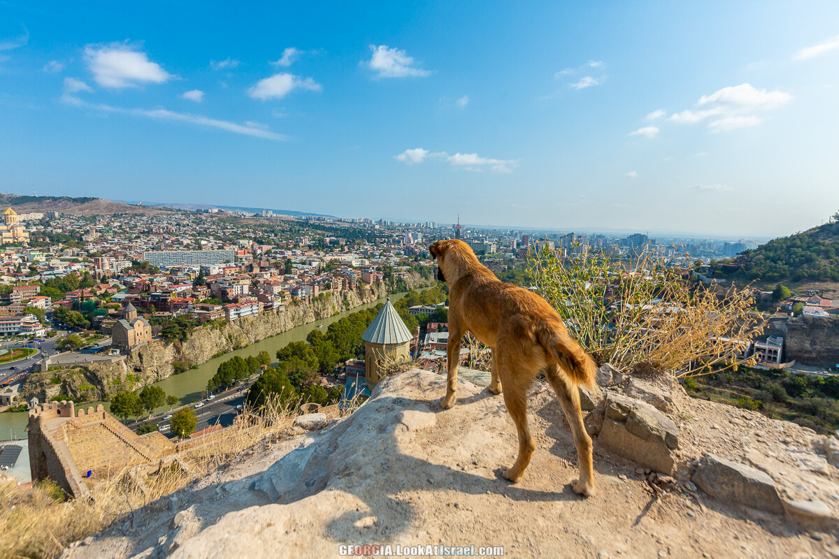 Тбилиси - город собак