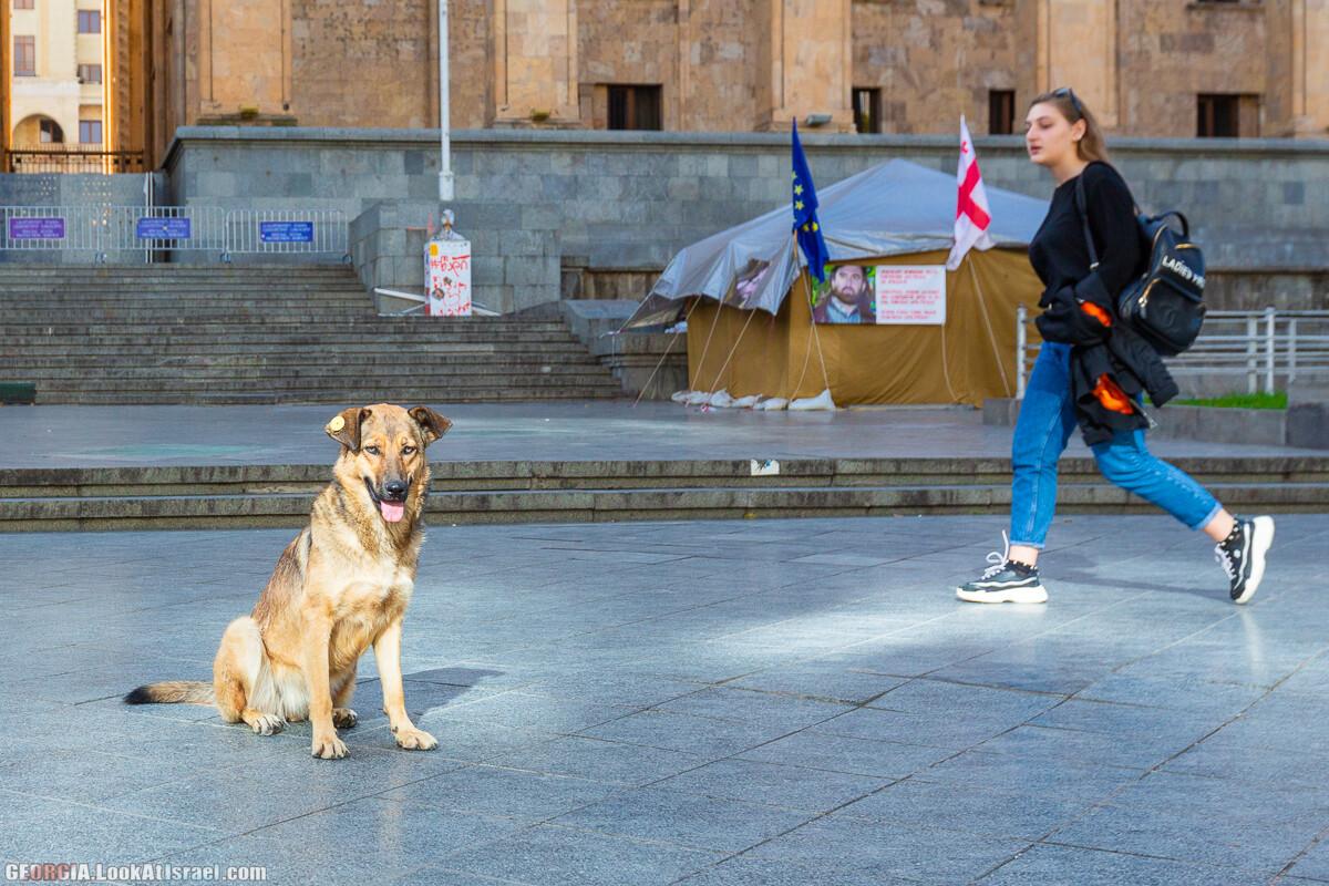 Тбилиси - город собак | LookAtIsrael.com - Фото путешествия по Израилю