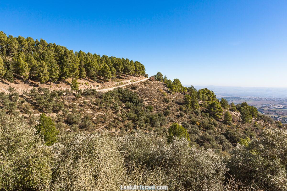 Лес Бирия | LookAtIsrael.com - Фото путешествия по Израилю