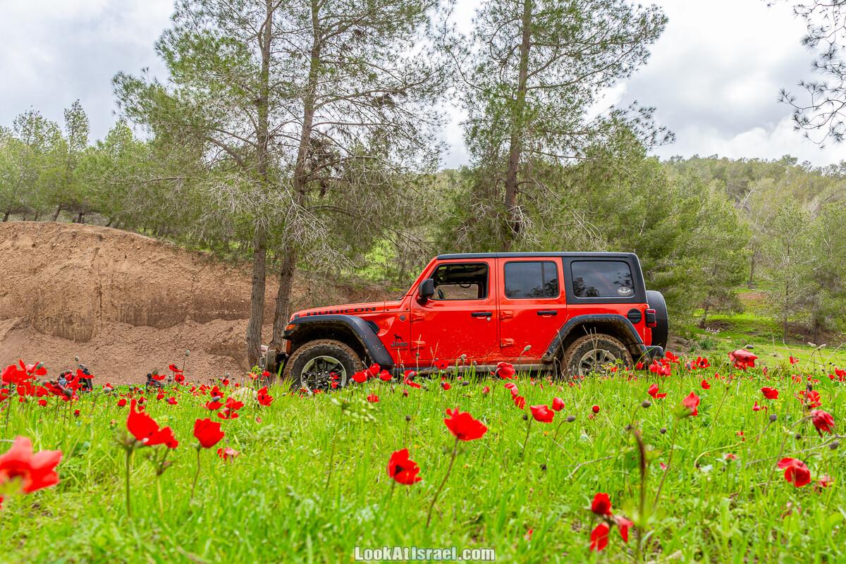 По зеленым холмам пустыни