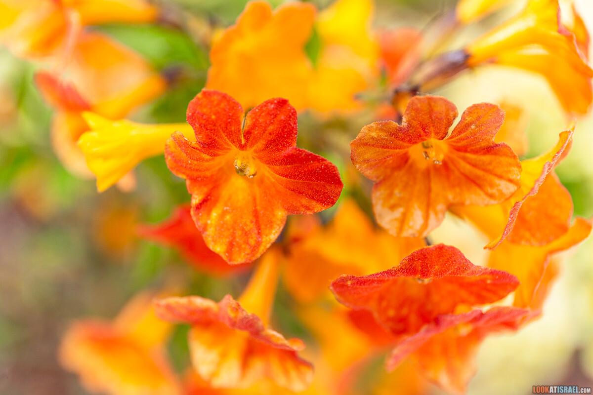 Ботанический сад Иерусалима, весна и цветение | LookAtIsrael.com - Фото путешествия по Израилю