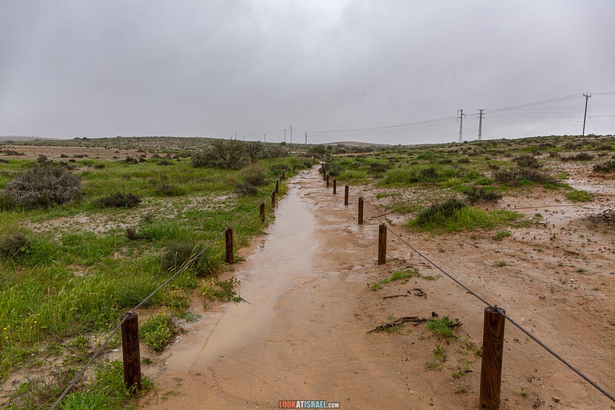 Ирис Йерухам | אירוס ירוחם | LookAtIsrael.com - Фото путешествия по Израилю