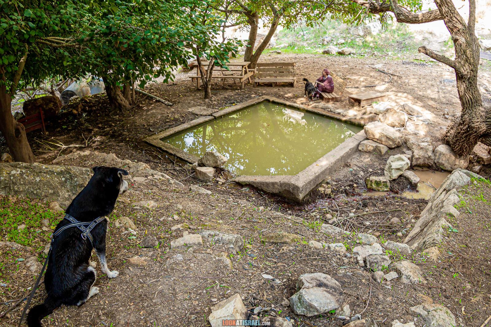 Поход по родникам в Гуш Эцион | LookAtIsrael.com - Фото путешествия по Израилю