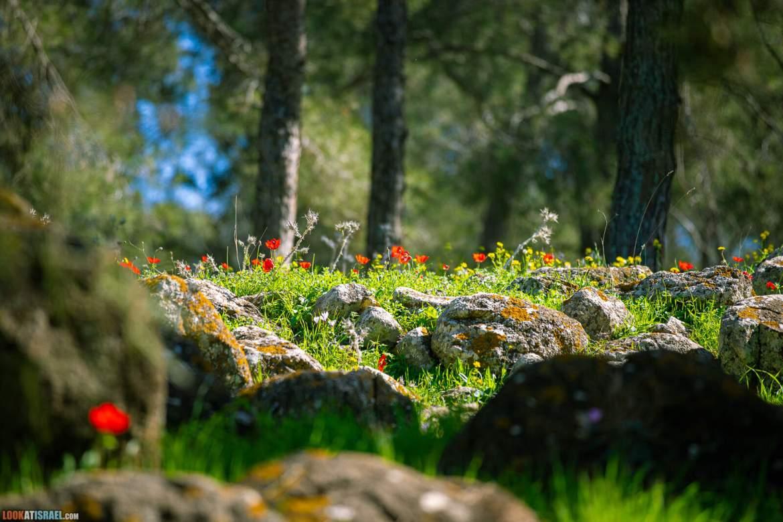 Гиват Аморэ | Givat HaMoreh | גבעת המורה | LookAtIsrael.com - Фото путешествия по Израилю