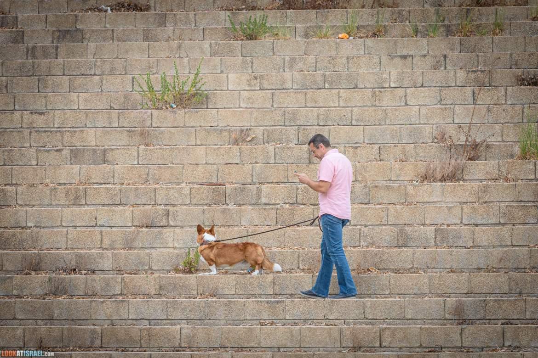 Выставка клуба пастушьих собак - корги кардиган и пембрук, Израиль 2021 | LookAtIsrael.com - Фото путешествия по Израилю