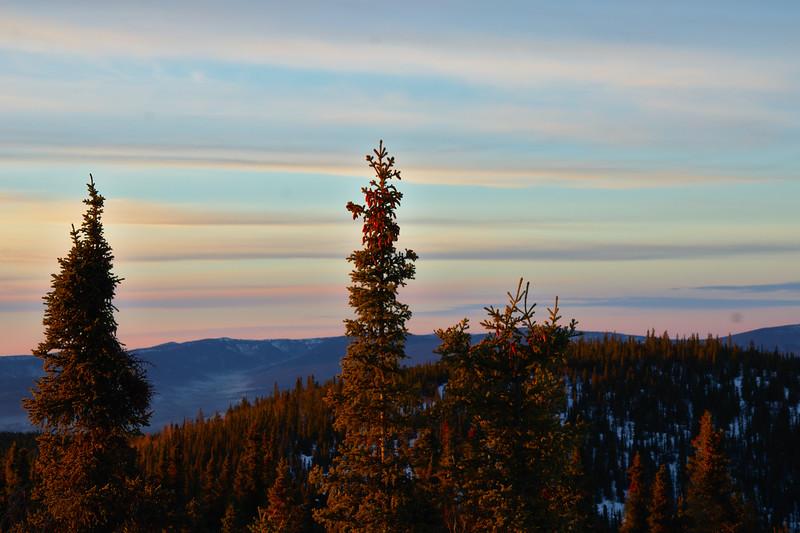 Golden light on the spruce and velvet pastels streaking the sky.