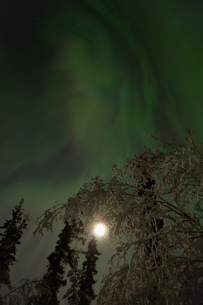 Between 2:30 and 3:00 am there was a drifting, pulsating aurora overhead. It was fairly diffuse, nowhere near as bright as earlier, but it was really cool to watch as it filled the sky with the bright moon.