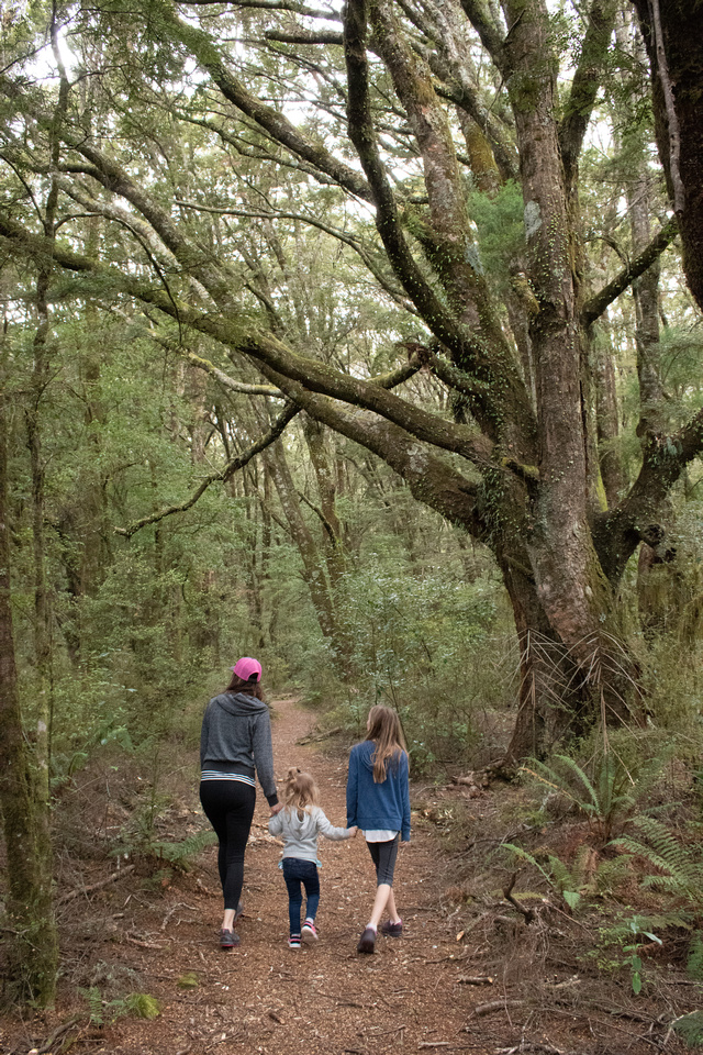 A mother and two daughters hold hands while walking through Podocarp forests near Makarora West