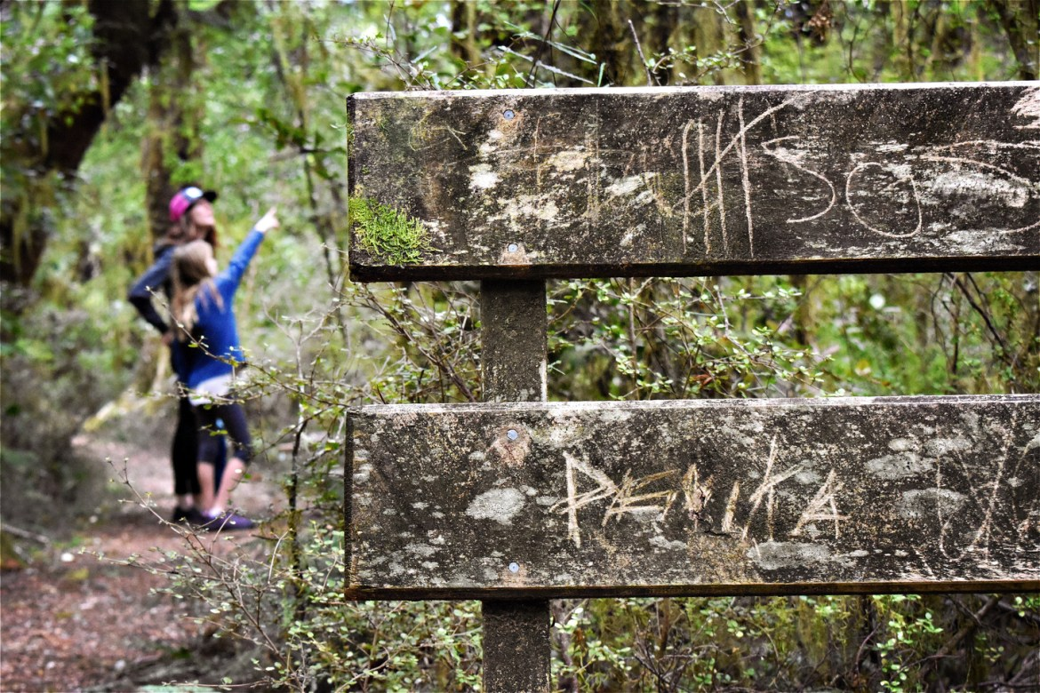 A family looks at native New Zealand bush on a trek around Makarora West's nature trails