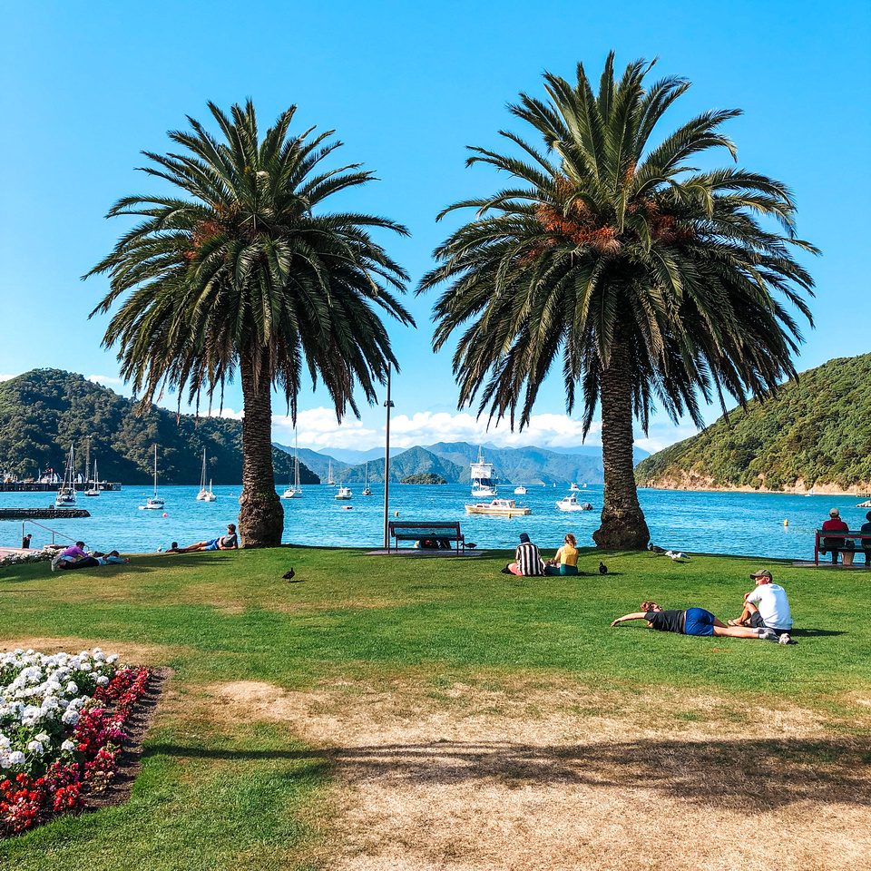 Two large palm trees overshadow a large grassy field in front of the sandy waterfront park in Picton, New Zealand.  Ships, boats, and the interislander ferry sit in the harbor beyond.
