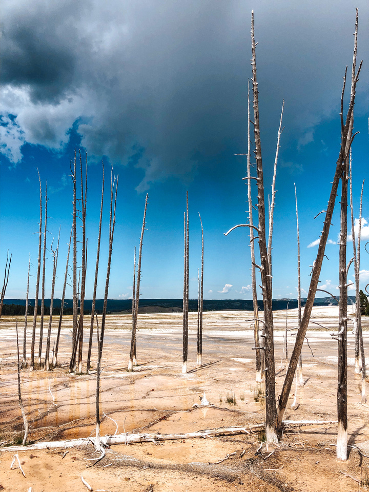 Yellowstone Vacation: Dead trees stick up out of the ground near Celestine hot spring and Fountain Paint Pots in Yellowstone National Park, Wyoming.  Deep blue sky contrasts with white clouds over the stark bacteria mats and mineral earth near the spring.