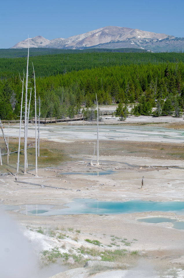 Yellowstone Hot Springs: A view of Yellowstone's Norris Geyser Basin.