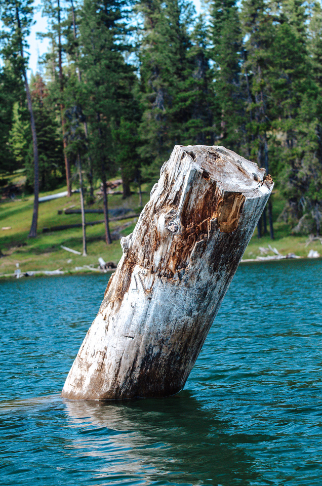 Best Place to Kayak - Magone Lake in Oregon.  A large stump protrudes from the center of Oregon's Magone Lake, near John Day, Oregon.