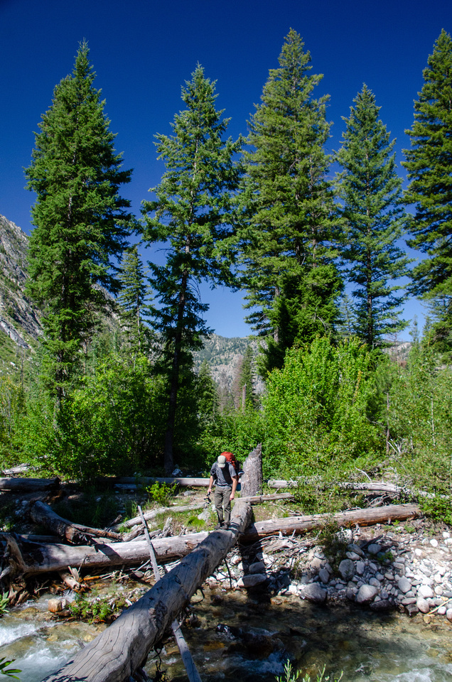 Best Baron Lakes Idaho Hikes - Grandjean Campground and Trailhead to Redfish Lake.  Large burned trees stand in a clearing along Baron Creek, about 3 miles upstream from the Grandjean Trailhead and Campground.