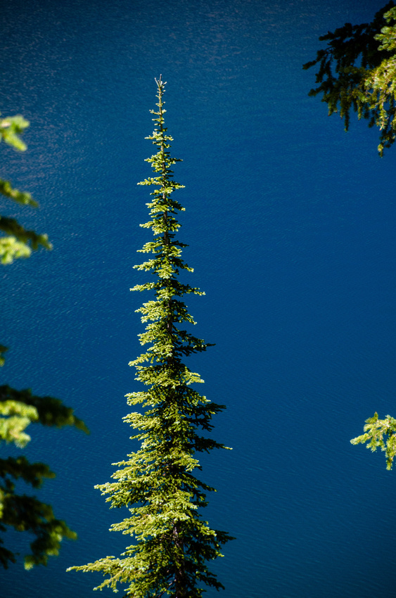 Best Baron Lakes Idaho Hikes - Grandjean Campground and Trailhead to Redfish Lake.  A vibrant green pine tree contrasts with the deep blue hue of Baron Lake, seen from the trail to Upper Baron Lake.