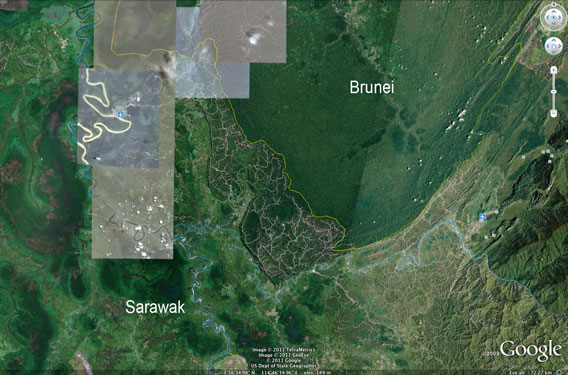 Logging roads and damaged forest in Sarawak compared with the healthy forest of Brunei