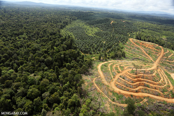 Conversion of logged forest to an oil palm plantation in Borneo.