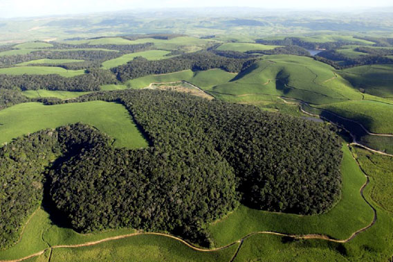 image from mongabay.com: http://news.mongabay.com/2011/0926-hance_tcs_ethanol_atlanticforest.html