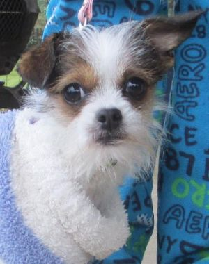 Adoptable Small Dogs In Washington State