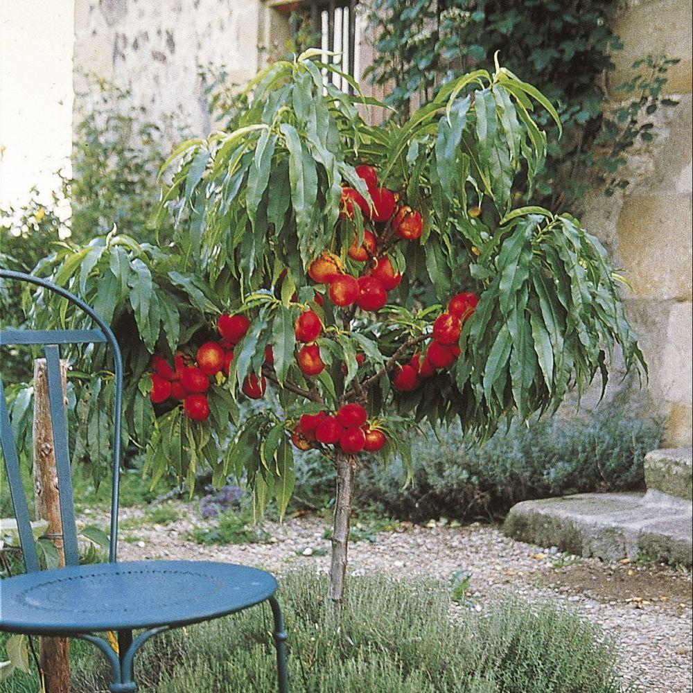 Mini Jardin D Interieur Lidl