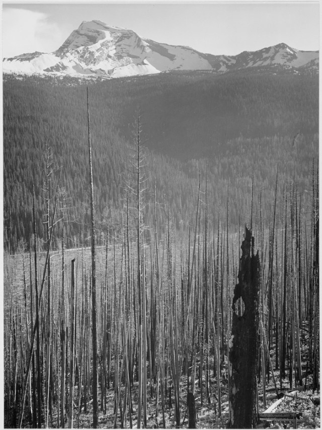 https://i0.wp.com/photos.pouryourheart.com/wp-content/uploads/2018/11/Pine-Trees-Snow-Covered-Mountains.jpg?w=640