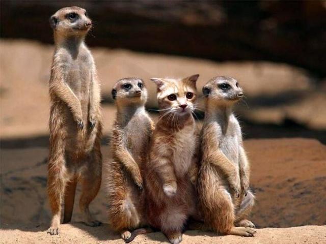https://i0.wp.com/photos.pouryourheart.com/wp-content/uploads/2018/12/Amazing-And-Cute-Animals-Pics-4.jpg?w=640