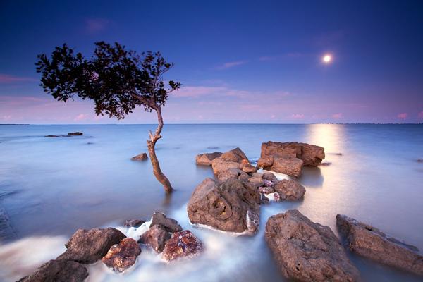 https://i0.wp.com/photos.pouryourheart.com/wp-content/uploads/2018/12/amazing-trees-5.jpg?w=640