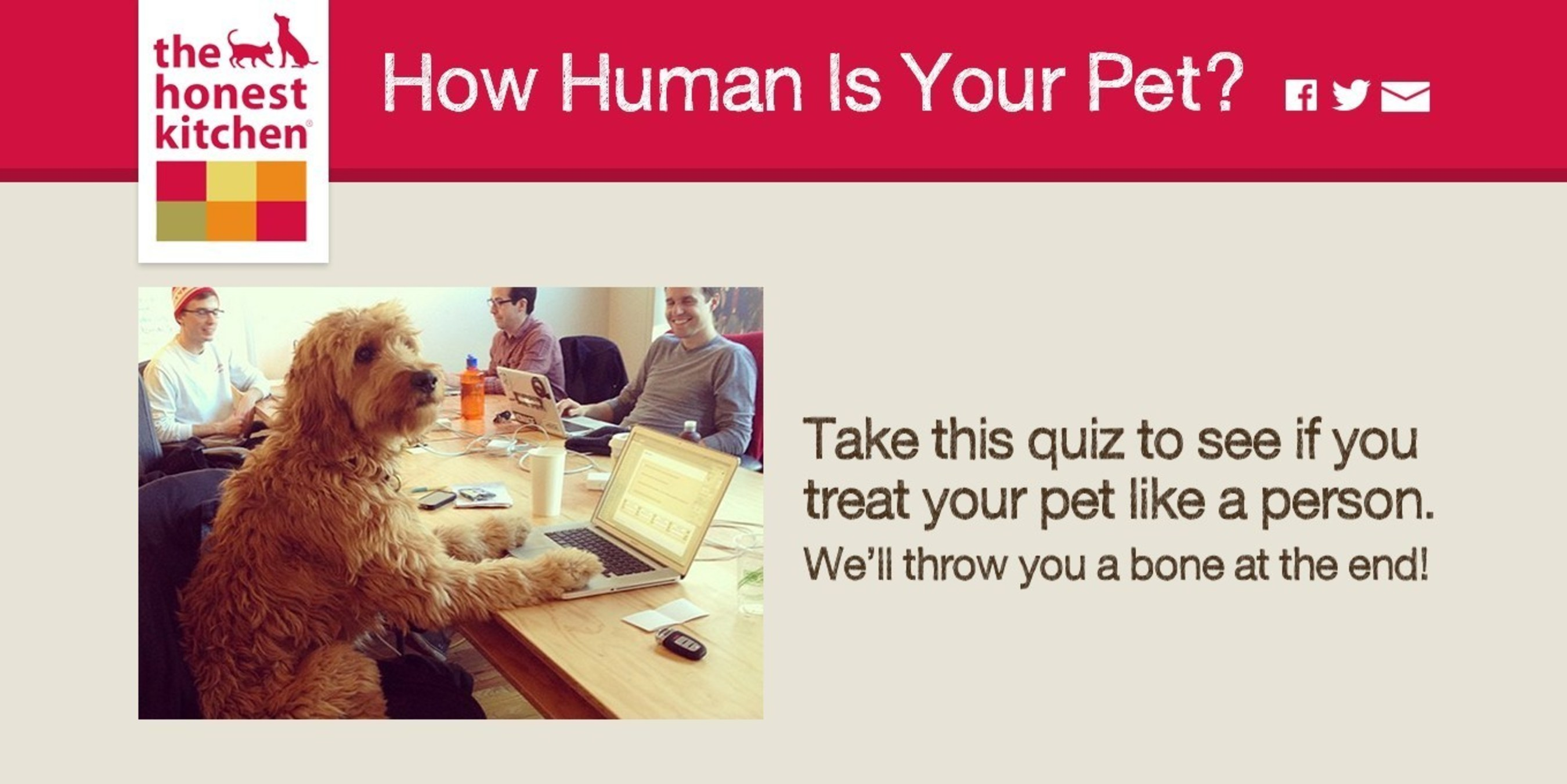 the honest kitchen good quality utensils asks how human is your pet wants to know answer and