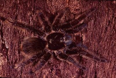 petco expands tarantula offerings