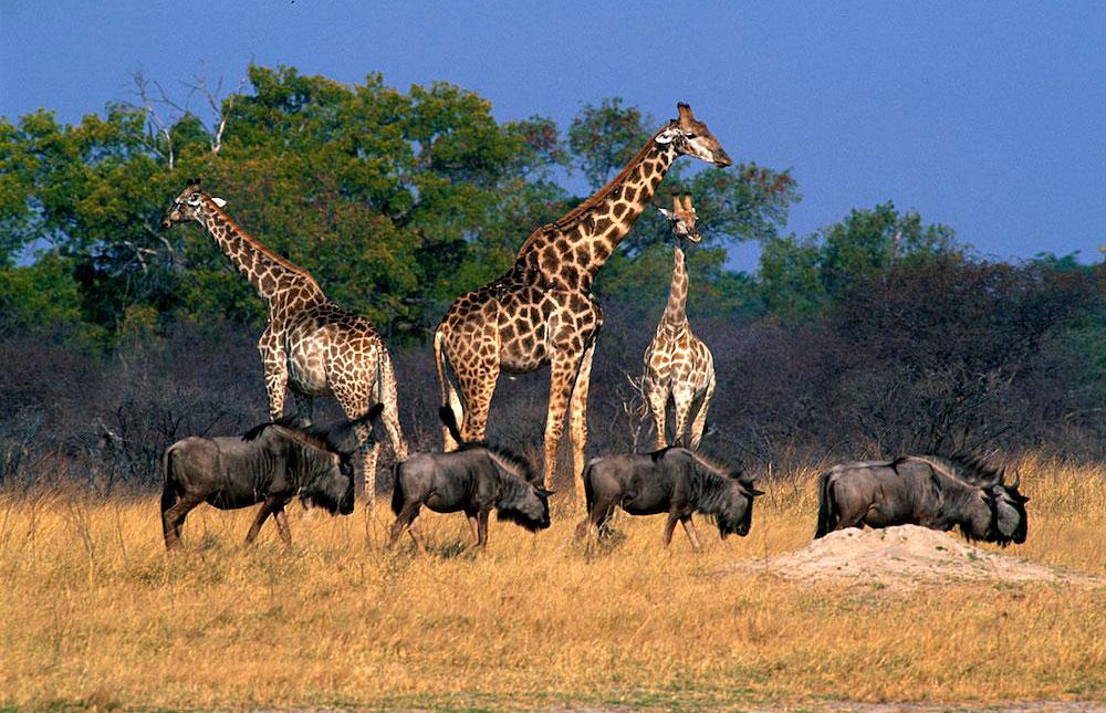 Image result for pics hwange national park zimbabawe africa