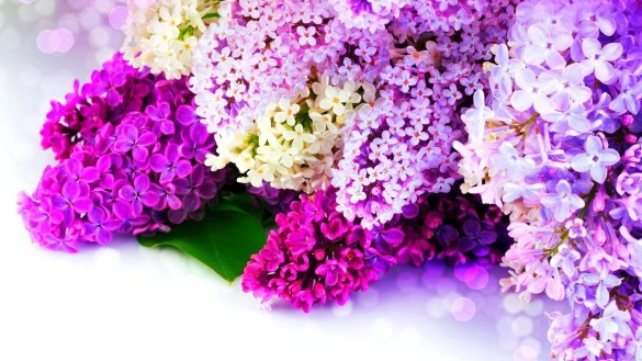 Latest Flowers Wallpapers HD Full HD 1080p (3)