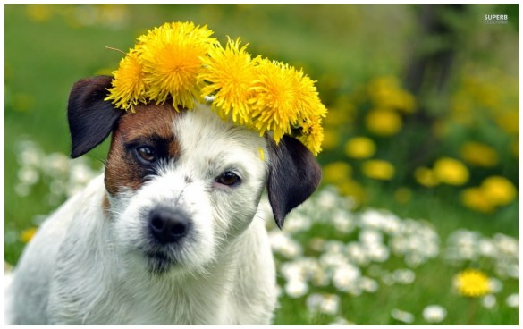 Dog Around Flowers images wallpapers