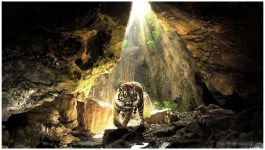 Tiger Lion Pictures Free