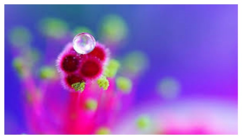 Dew Drops On A Clover